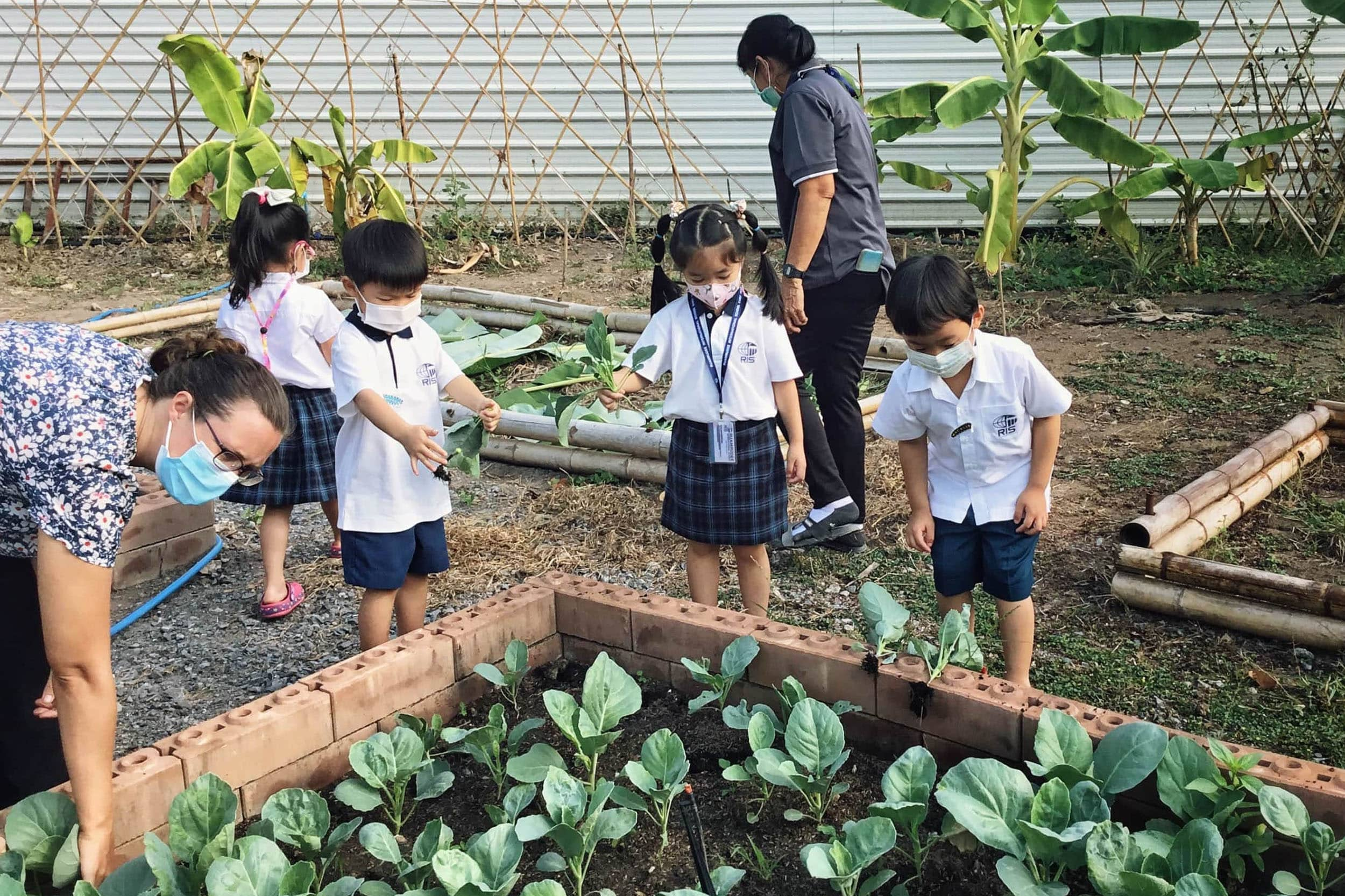 RIS Early Years' seed-to-table program is a natural living classroom with a greenhouse and pesticide-free planting beds. The program fosters a lifelong appreciation of fresh, healthy foods.